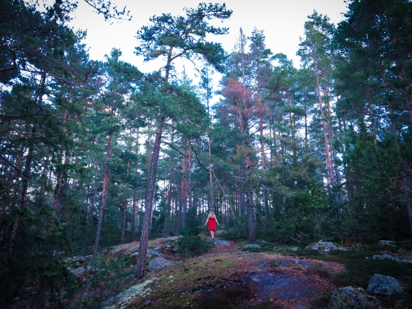 Skogsfotografering Stockholm